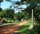 Pathway to Dhamma Nagajjuna 1
