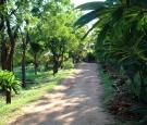 dn1-path